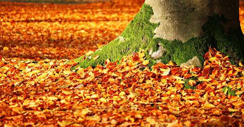 Don't Fall Behind on November's Printer and Wacom Promos