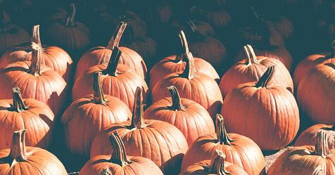 A Treat for You: Printer+Wacom October Promos