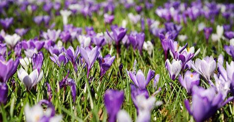 Spring into Printer and Wacom Deals April 2018
